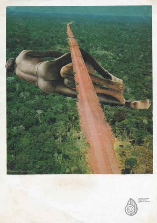 Amazonia Report - FLORA